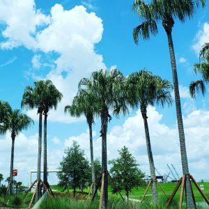 Goodbye Summer Palms